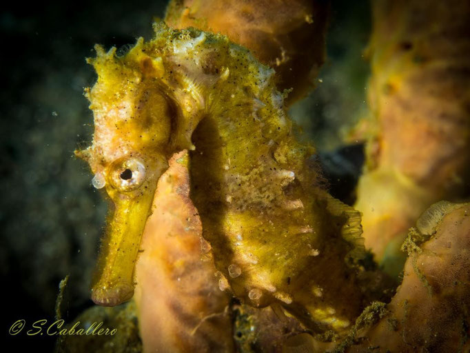 Diving Indonesia, Blue bay Divers