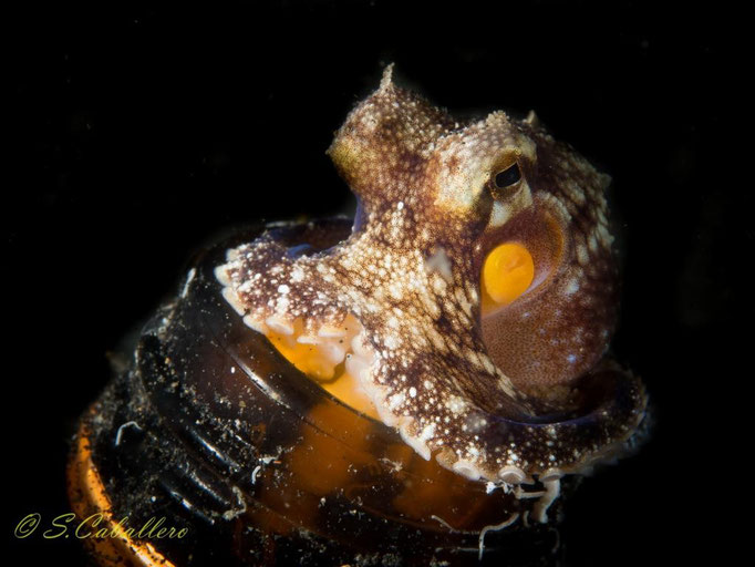 Diving Indonesia, Blue bay Divers , Lembeh Strait