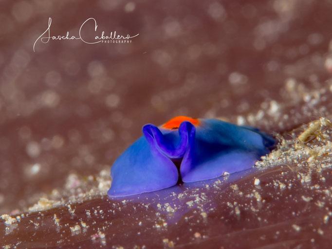 Diving Maratua Atoll
