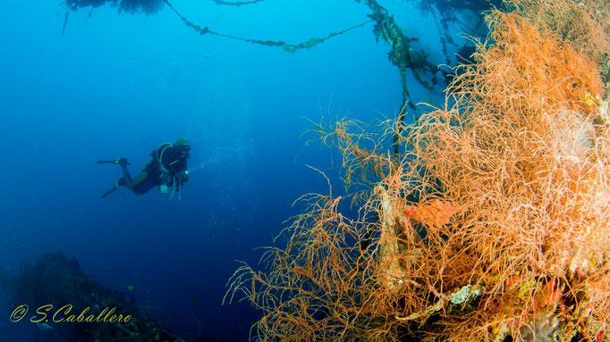 Diving Indonesia, Prince John Dive Resort
