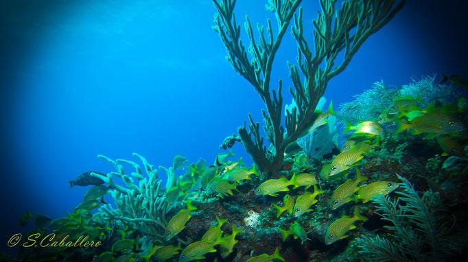 Diving Cayo Largo
