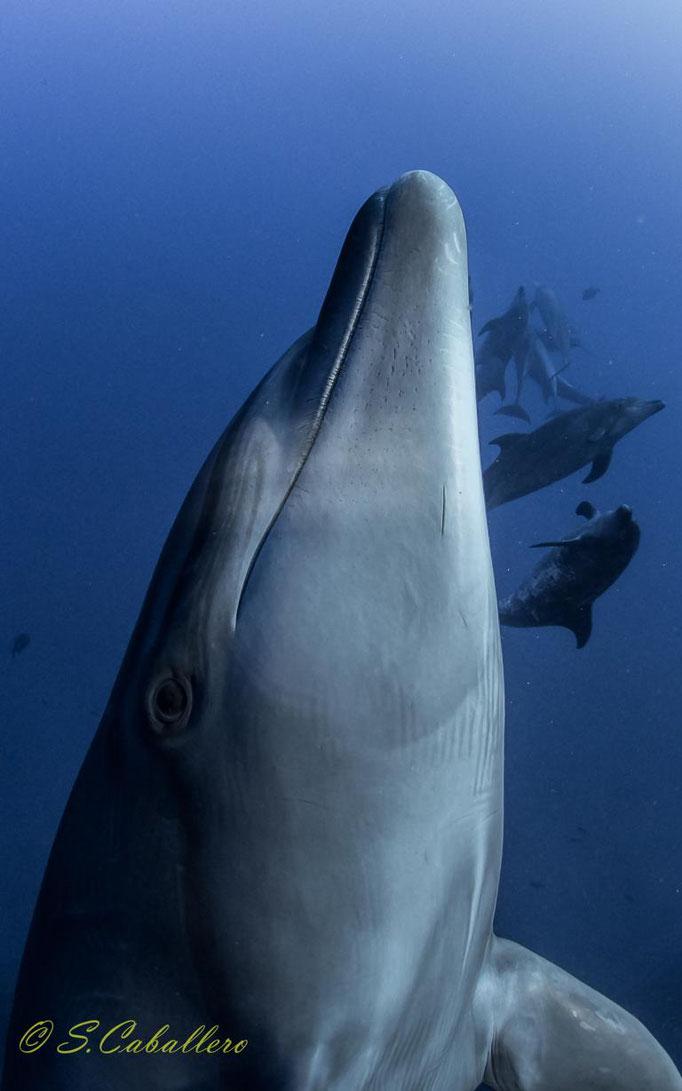 Wild Dolphins of Socorro