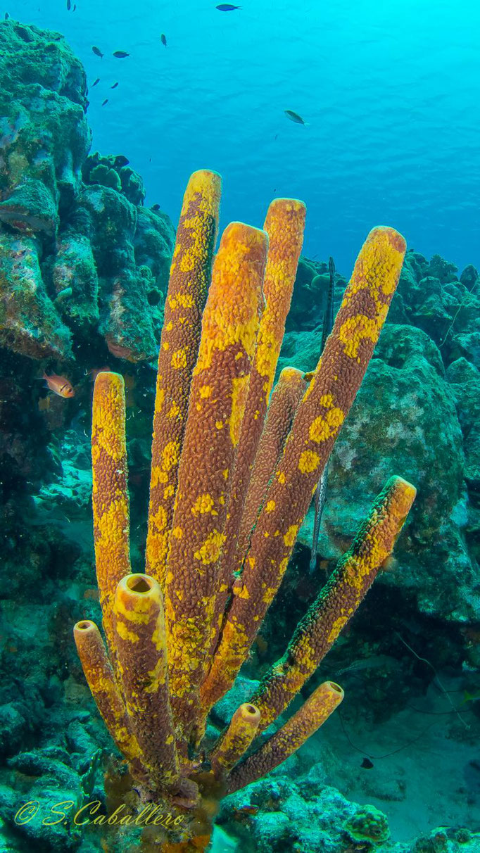 Diving Curacao