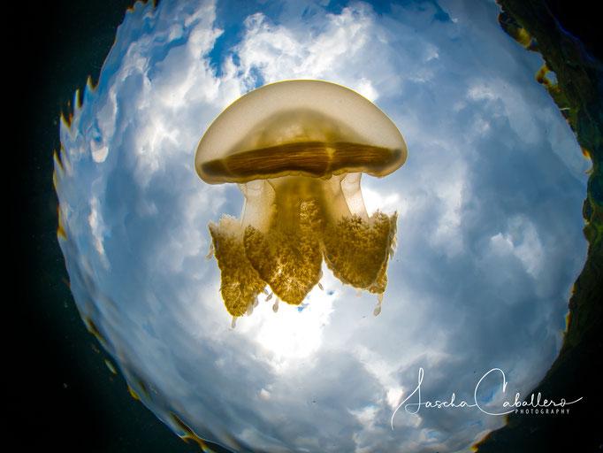 Jelly Fish Lake Kakaban Martua Atoll