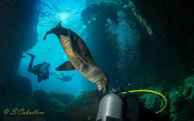 SEA LIONS AT LOS ISLOTES, BAJA CALIFORNIA,
