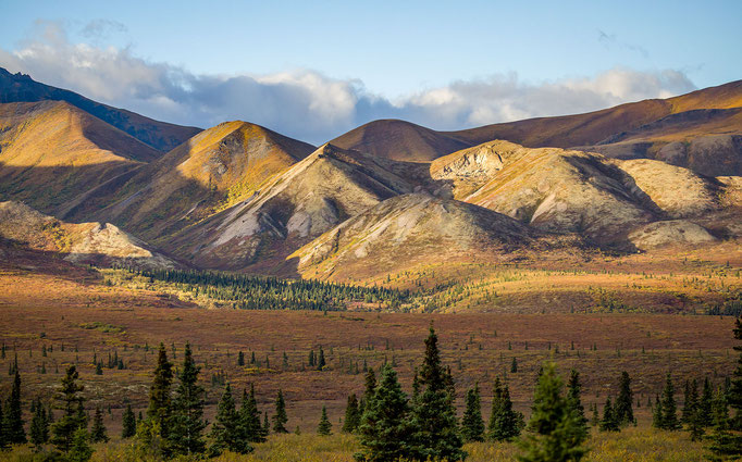 Denali National Park - Alaska - 2