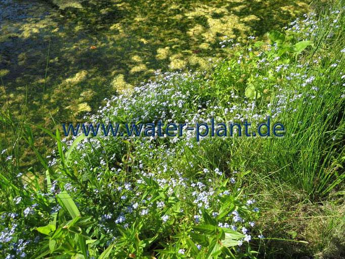 Röhrichtmatten enthalten viele attraktive Sumpfpflanzen