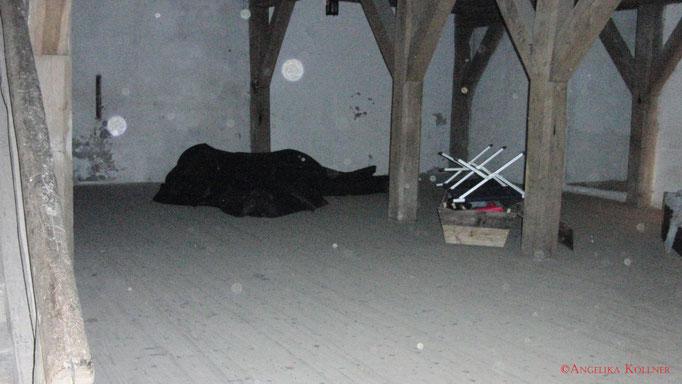 Eine wunderschöne Stauborb-Kolonie. #Bitche #paranormal #ghosthunters