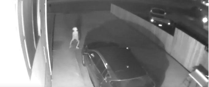 In einem seltsamen Seitwärtsgang läuft das Wesen weiter in die Mitte der Einfahrt. #creature #dobby #ghosthunters #ghost #paranormal