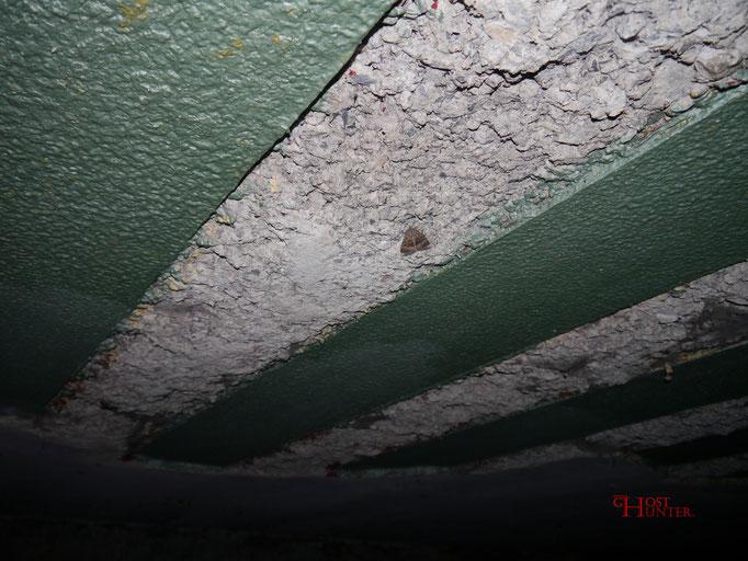 Wie man sieht, leben Motten, bzw. Falter, also Insekten im Tunnel.