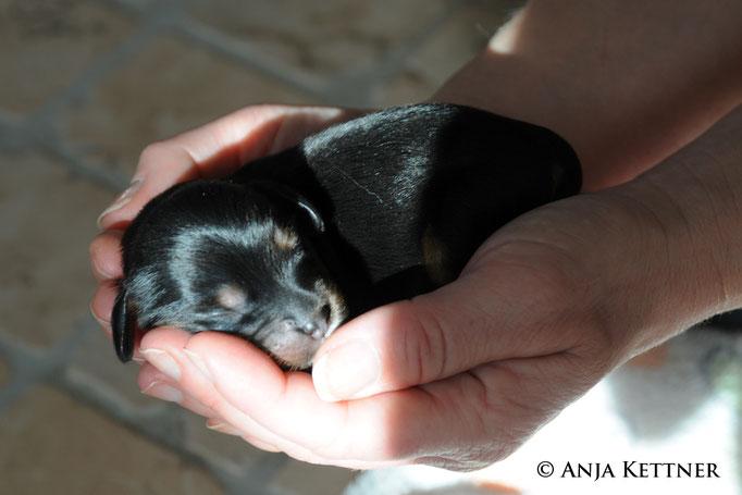 Cantos in der Hand eingeschlafen