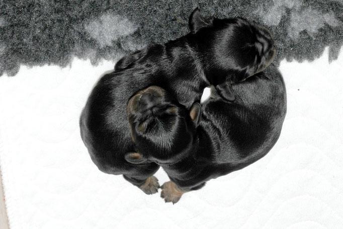 Die beiden Brüder unzertrennlich 2 Tage klein