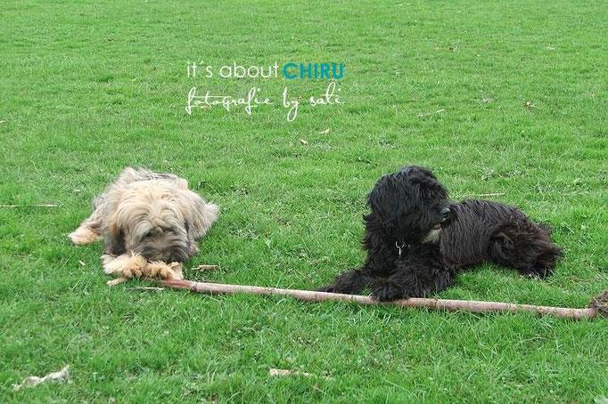 Chiru mit Schwester Dakini