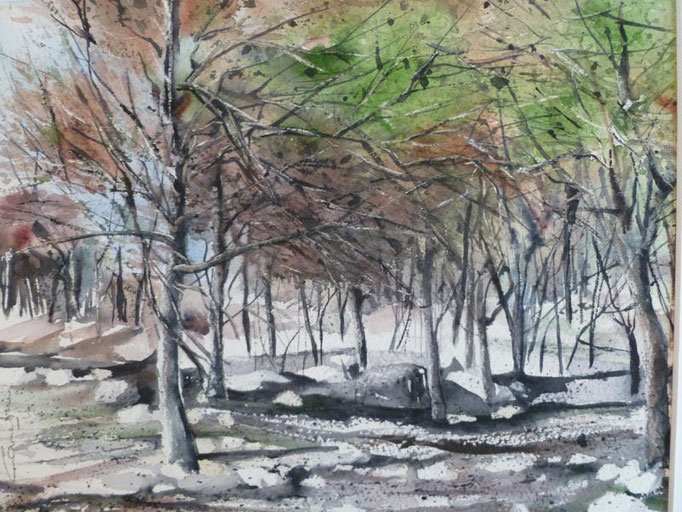 La pinède après l'incendie - n°2 - 21.5x27.5 collection privée(2010)