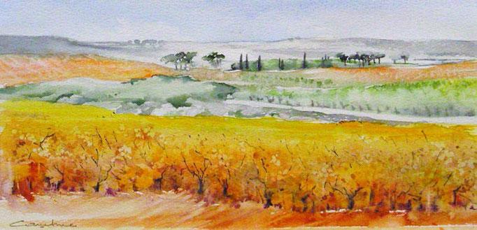 13-Vignes à l'Hospitalet ,Les horizons brûlés 16 x 33  collection privée(2011)