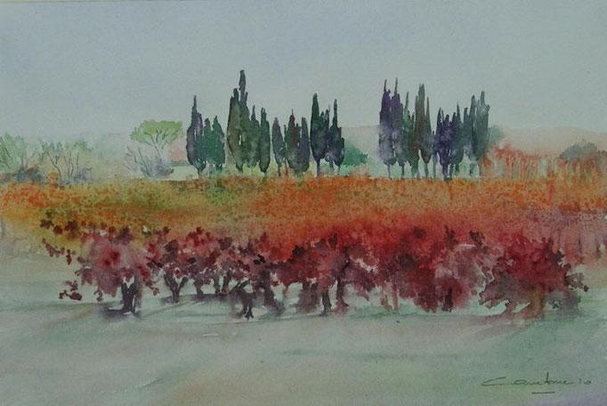 32-Vignes et cyprès 18x27 collection privée(2010)