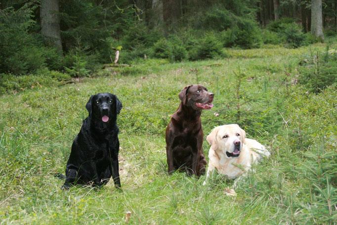 Gandalf, Jana und Paddy