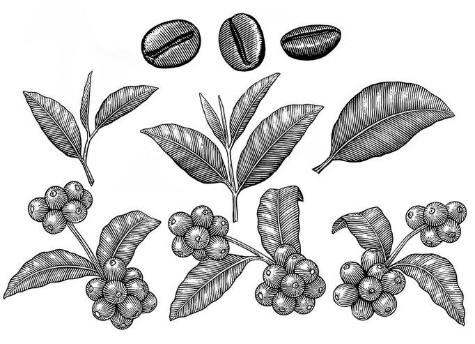 コーヒー豆と紅茶の葉