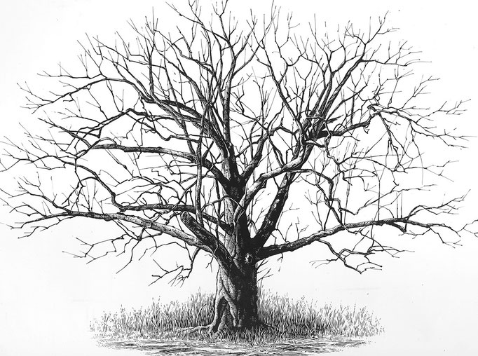 ワイエスの木