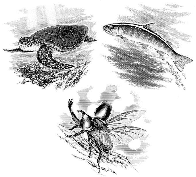 動物昆虫3種.