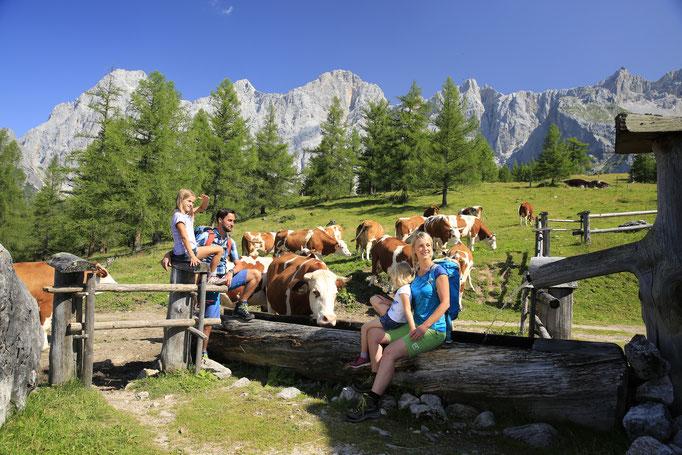 Wandern Schladming-Dachstein