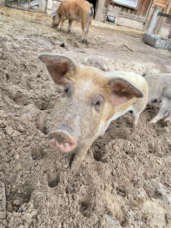 Schwein gehabt: Der Kinderbauernhof ist ein kleines Paradies