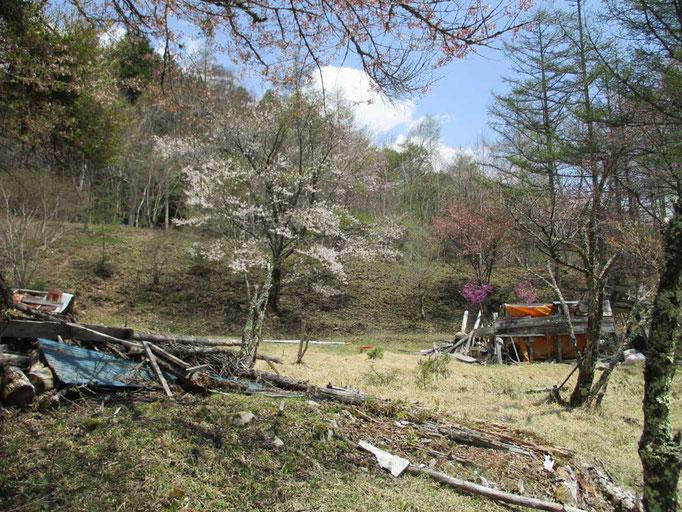 一の瀬 高橋の集落跡に咲く桜