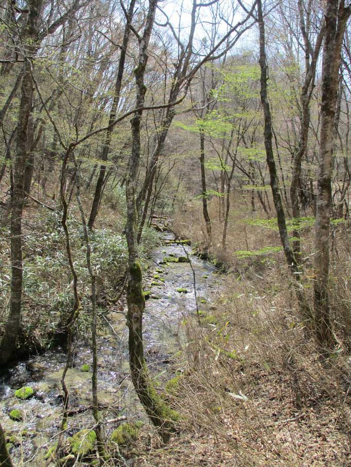 渓流沿いを歩く