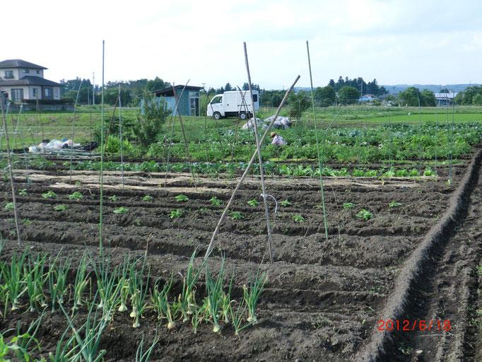 こんな感じで農作業をしております