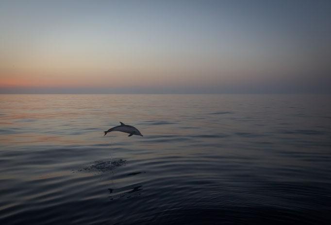 Dolphin around our boat, Mediterranean Sea, Sicily, Italy (2019)