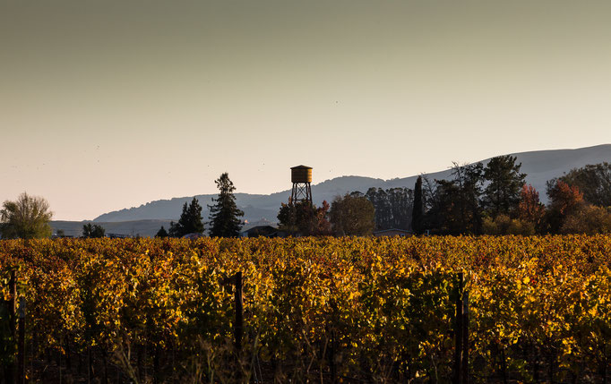 Napa Valley, Californien, USA (2015)