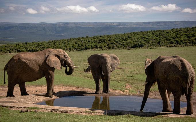 Addo Elephant Park, South Africa (2013)