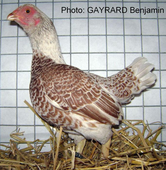 Valence d'Agen 2011/élevage Escoffier