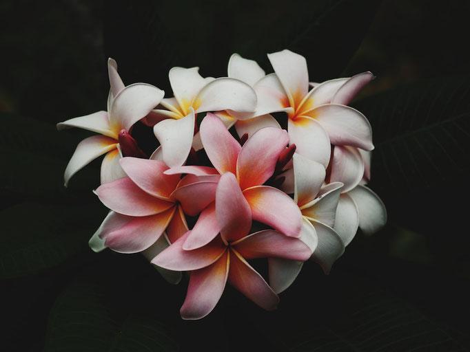 Volle pflanzliche Blütenpracht.