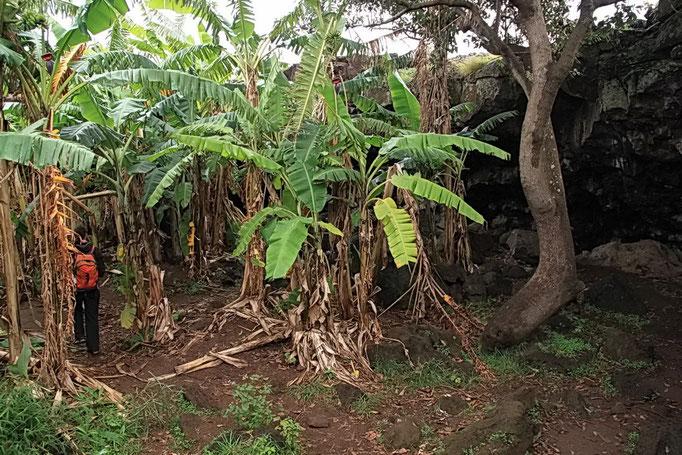 Banana cave