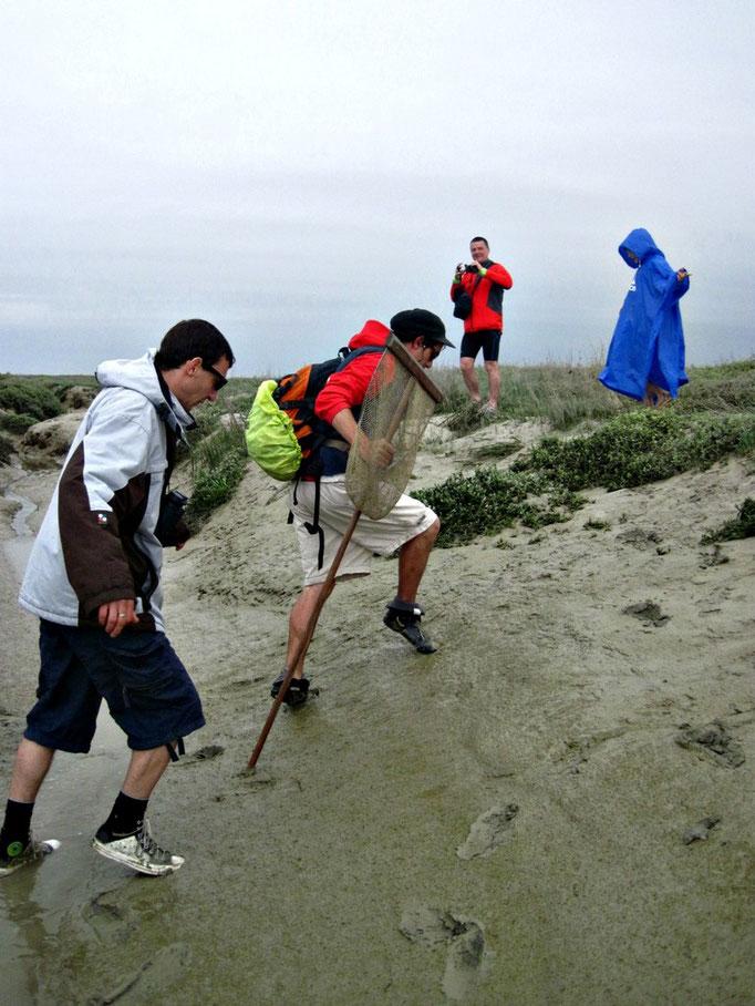 Traverser la Baie de Somme avec votre guide