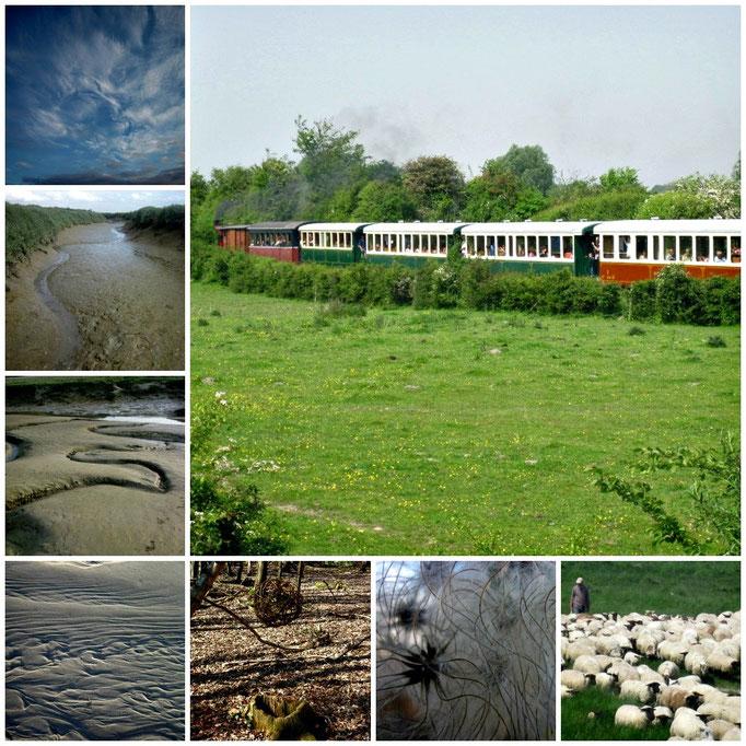 La traversée de la Baie de Somme avec votre guide