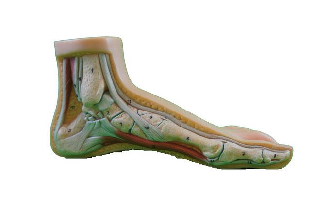 gesunder Fuß
