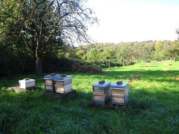 A.Walker, Bienenstöcke auf Streuobstwiese