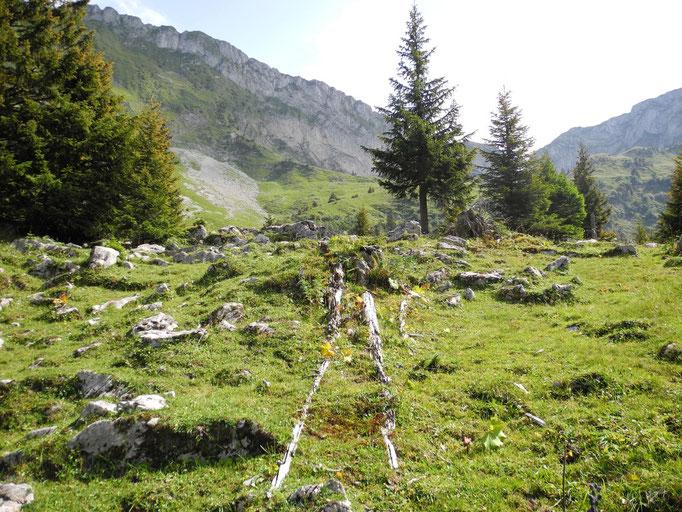 Gefallene Bäume und Fels prägen die Landschaft.