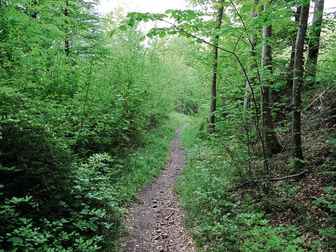 Waldweg hinab nach Helgisried.