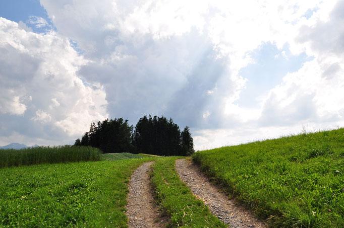 Dieser Weg... beim Tavel-Denkmal am Längenberg.