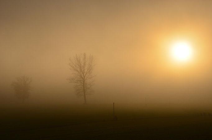 Nebelstimmung in Gasel.