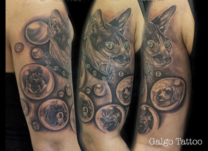 tatuaje de realismo, conjunto de mascotas, los 3 perros de la chica y el gato sphynx, black and grey realistic cat and dogs tattoo