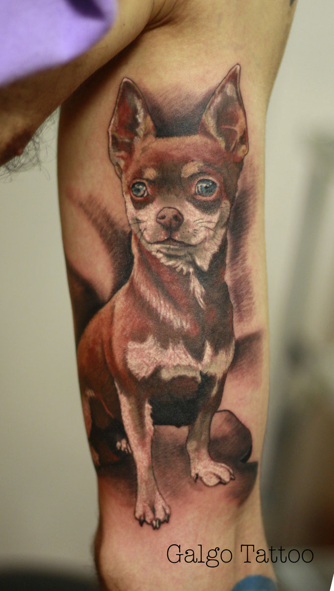 Inner bicep colour realistic tattoo of a chihuahua done in the Canary Islands, Spain.