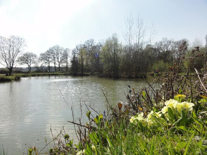Spring Primrose