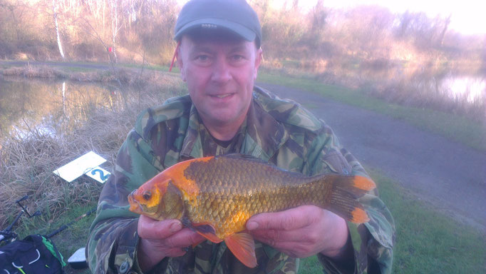 Paul's colourful Goldfish. An Ashmoor rarity