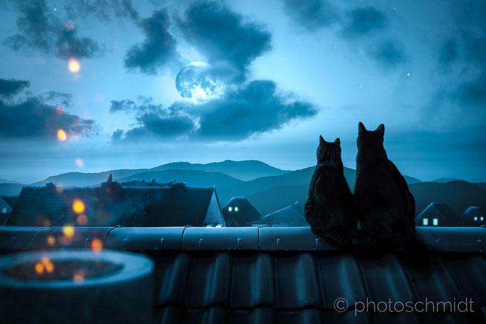 Zwei Katzen sitzen nachts auf einem Dach während der Vollmond scheint