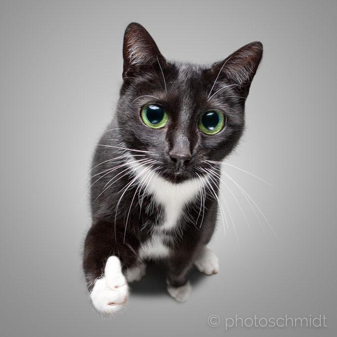Katze gibt Daumen hoch
