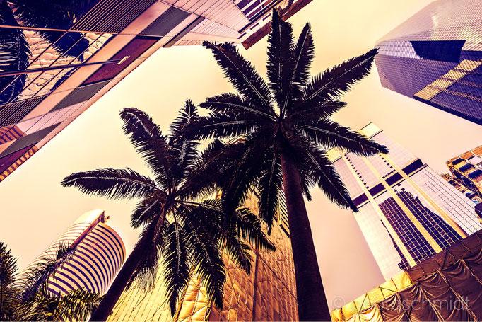 Tropische Palmen in der Stadt